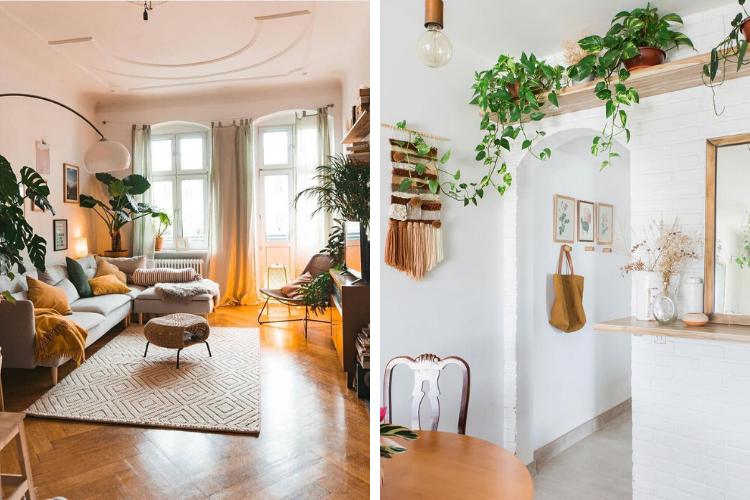 Nos 5 plantes d'intérieur préférées et leurs bienfaits
