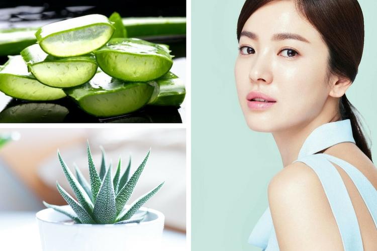 Aloé Vera : les bienfaits pour la peau