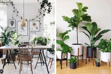 Bien-être : quelle plante choisir pour son intérieur ?