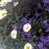 Clemfou aime Daily Microfoliant®, Dermalogica