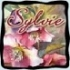 sylvie62690