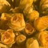 Chaouia aime Poudre Compacte matifiante 8h, Sephora