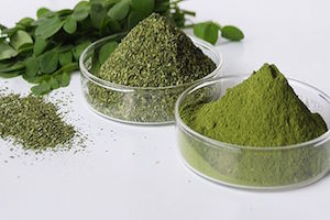 moringa-superaliment