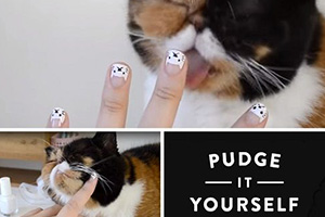 Nail art chat avec Pudge the cat